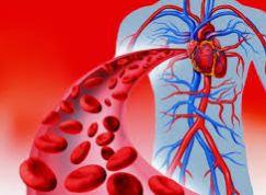 پاورپوینت تاثیر ورزش بر دستگاه گردش خون