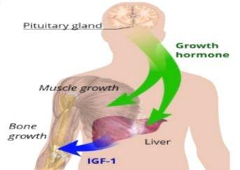 پاورپوینت در مورد هورمون رشد