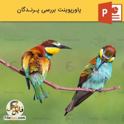 پاورپوینت درباره پرندگان و بررسی آنها